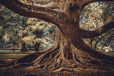 43900759 - the root of the tree in the forest. fashion colored and toned